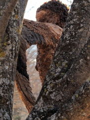 'Femme oiseaux' BarbaraF (détail dans un arbre)