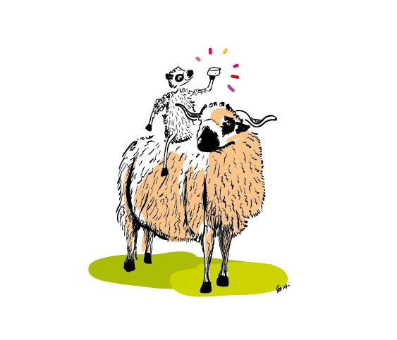 thones et marthaud avec agneau-01